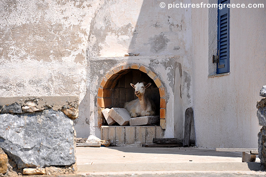 Amorgos. Goat in the oven